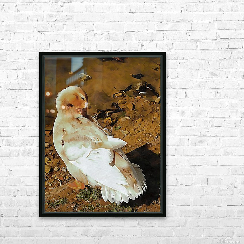 Buff Orpington Duck Preening HD Sublimation Metal print with Decorating Float Frame (BOX)
