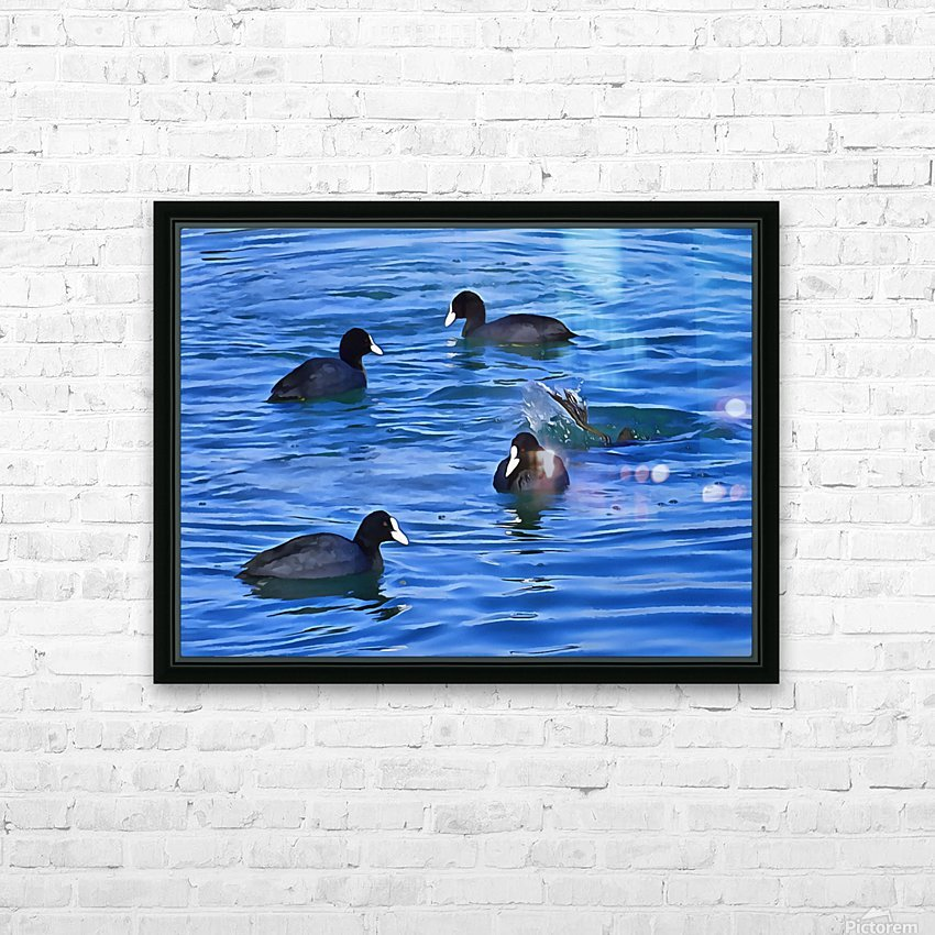 Coots Feeding HD Sublimation Metal print with Decorating Float Frame (BOX)
