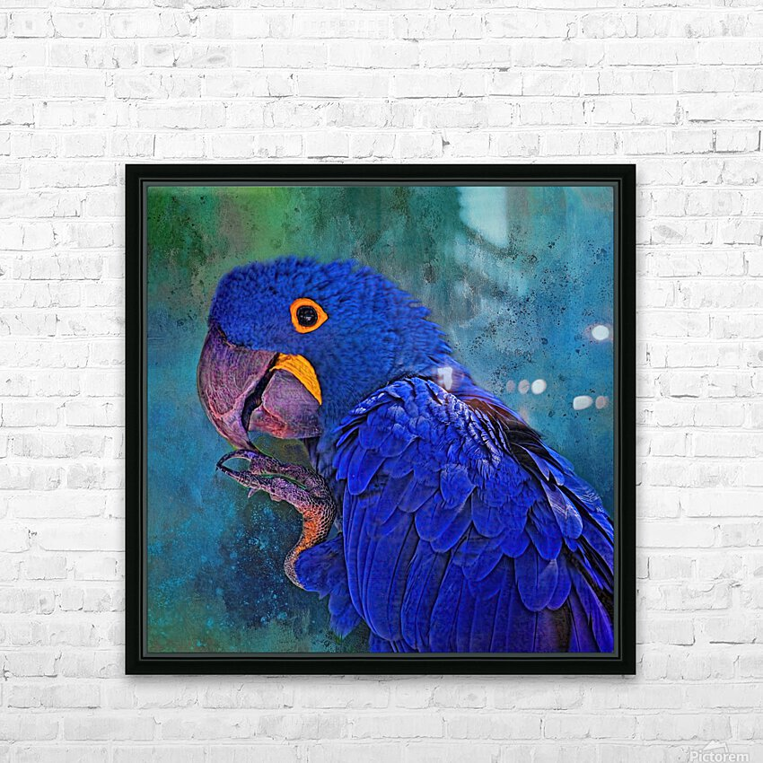 Hyacinth Macaw HD Sublimation Metal print with Decorating Float Frame (BOX)