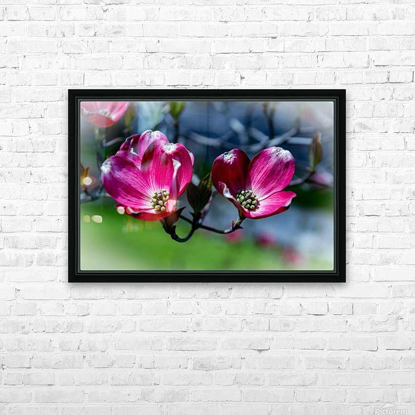 Dogwood 2 HD Sublimation Metal print with Decorating Float Frame (BOX)
