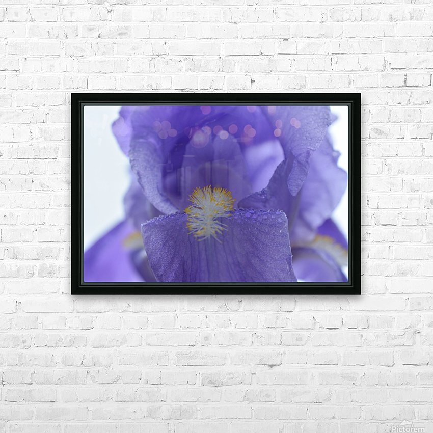 Purple Iris Photograph HD Sublimation Metal print with Decorating Float Frame (BOX)