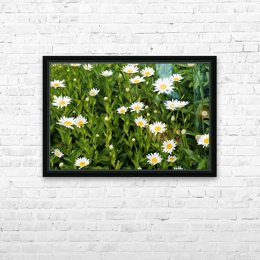 Dow Gardens Daisies 062618 HD Sublimation Metal print with Decorating Float Frame (BOX)