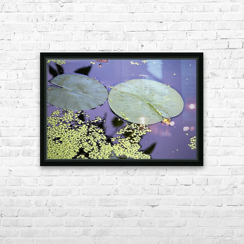 Lily Pads and Duckweed Dow Gardens 2018 HD Sublimation Metal print with Decorating Float Frame (BOX)