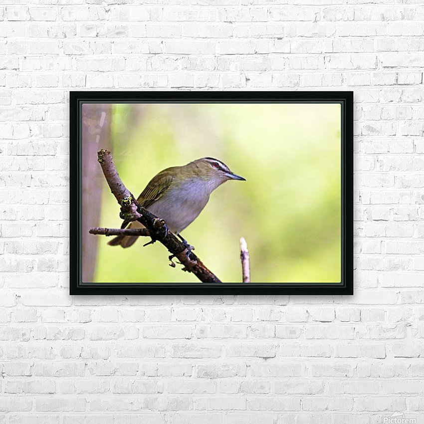 The Tireless Songster HD Sublimation Metal print with Decorating Float Frame (BOX)