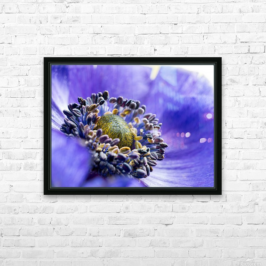 Blue Flower Anemone Close-up Macro HD Sublimation Metal print with Decorating Float Frame (BOX)