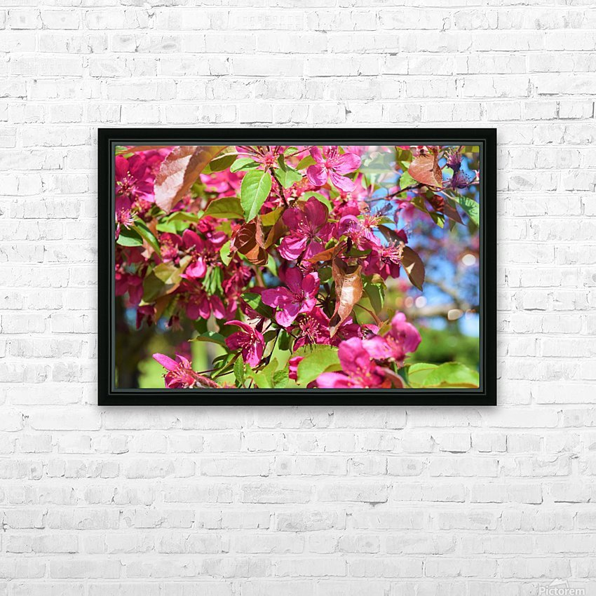 Ticonderoga Crab Apple Flowers in May HD Sublimation Metal print with Decorating Float Frame (BOX)