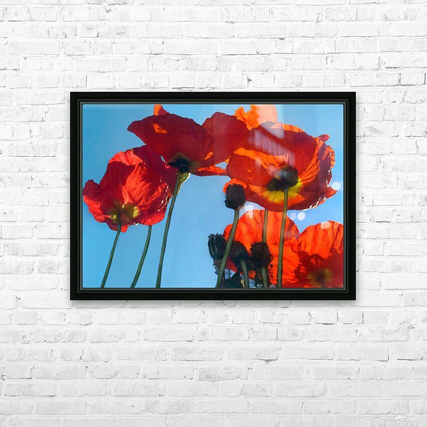 Poppies in the Sky HD Sublimation Metal print with Decorating Float Frame (BOX)