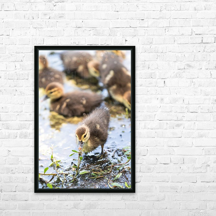 Baby - Baby Duck HD Sublimation Metal print with Decorating Float Frame (BOX)