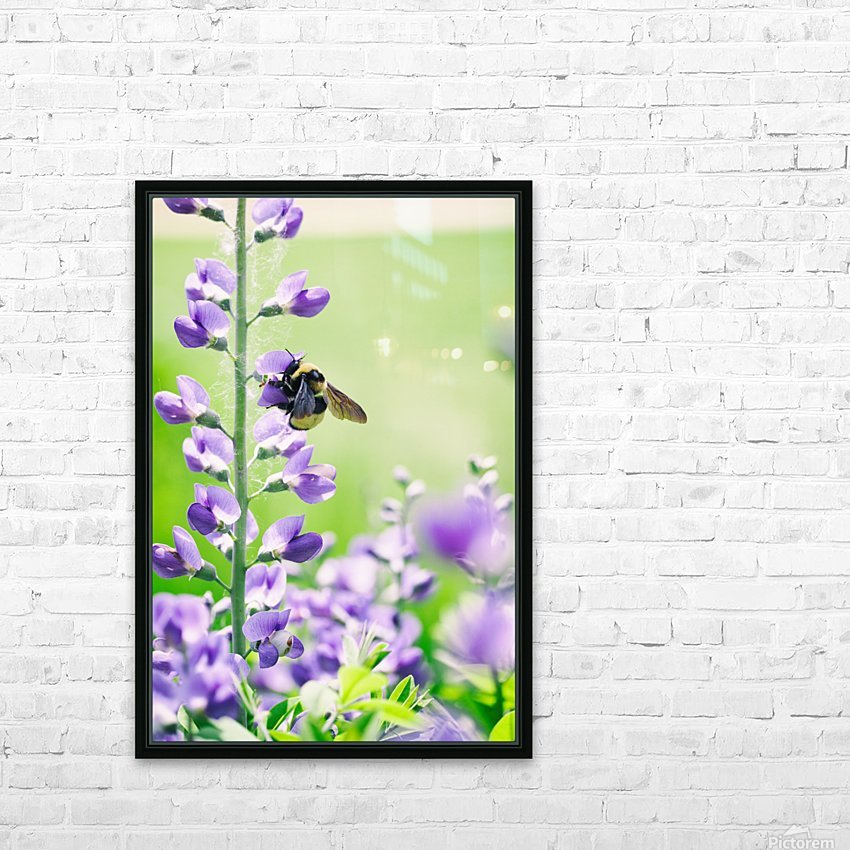 Bee In Flight 2 HD Sublimation Metal print with Decorating Float Frame (BOX)