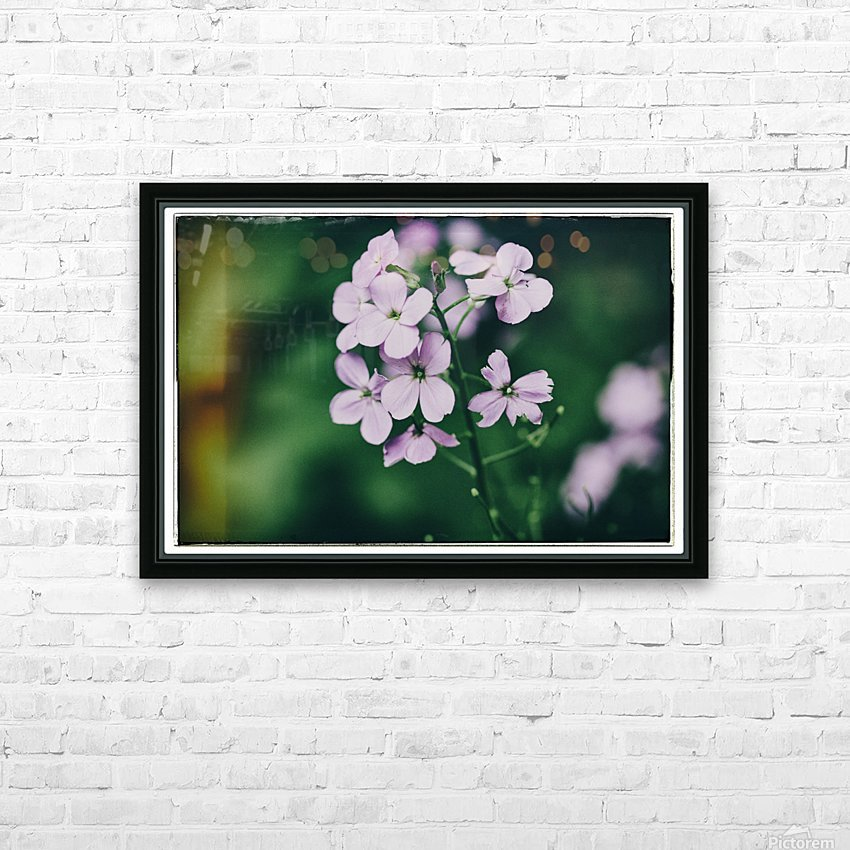 Phlox in Bloom HD Sublimation Metal print with Decorating Float Frame (BOX)