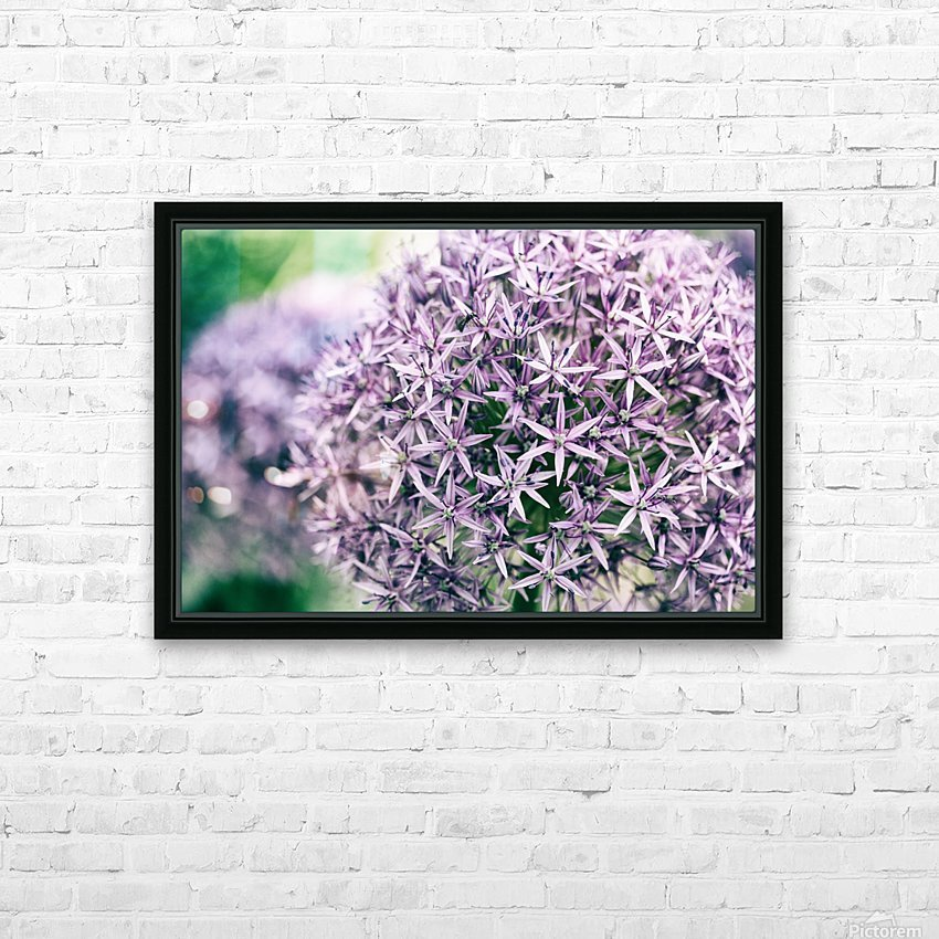 Allium in Bloom HD Sublimation Metal print with Decorating Float Frame (BOX)
