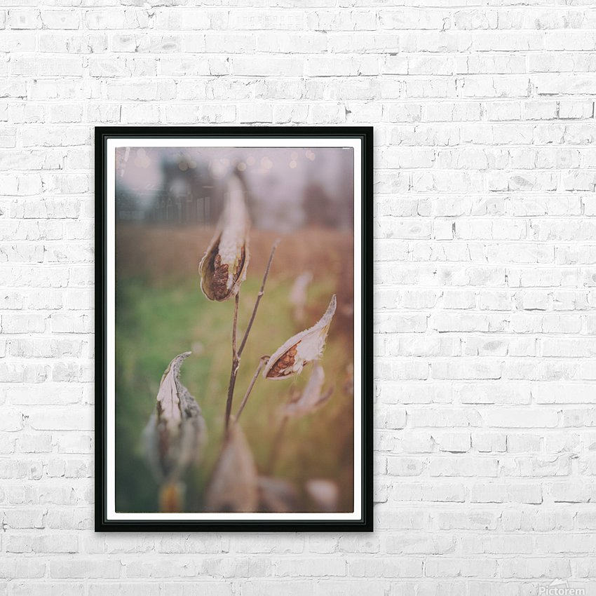 Milk Weed in the Fall HD Sublimation Metal print with Decorating Float Frame (BOX)