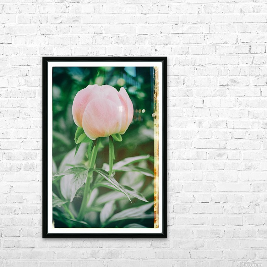 About To Bloom HD Sublimation Metal print with Decorating Float Frame (BOX)