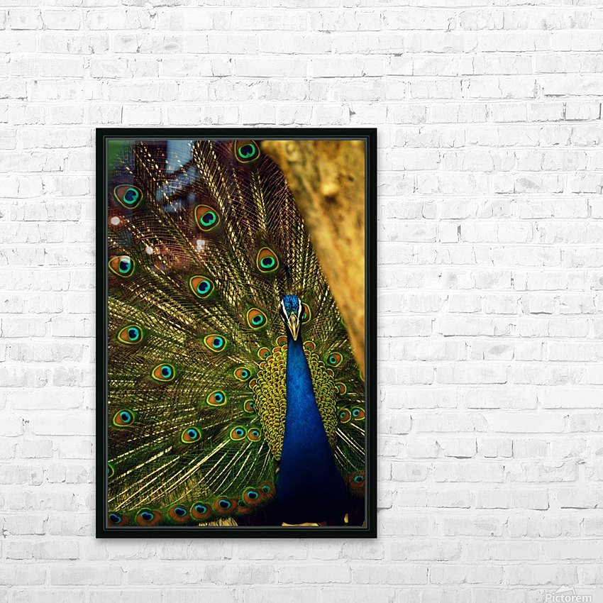 blue and green peafowl HD Sublimation Metal print with Decorating Float Frame (BOX)