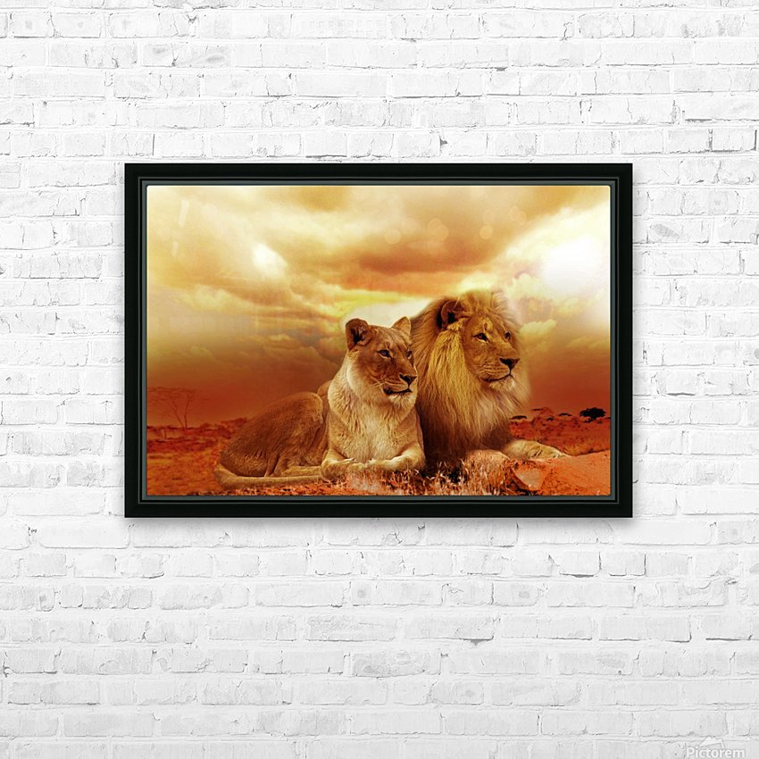 lion safari africa landscape HD Sublimation Metal print with Decorating Float Frame (BOX)