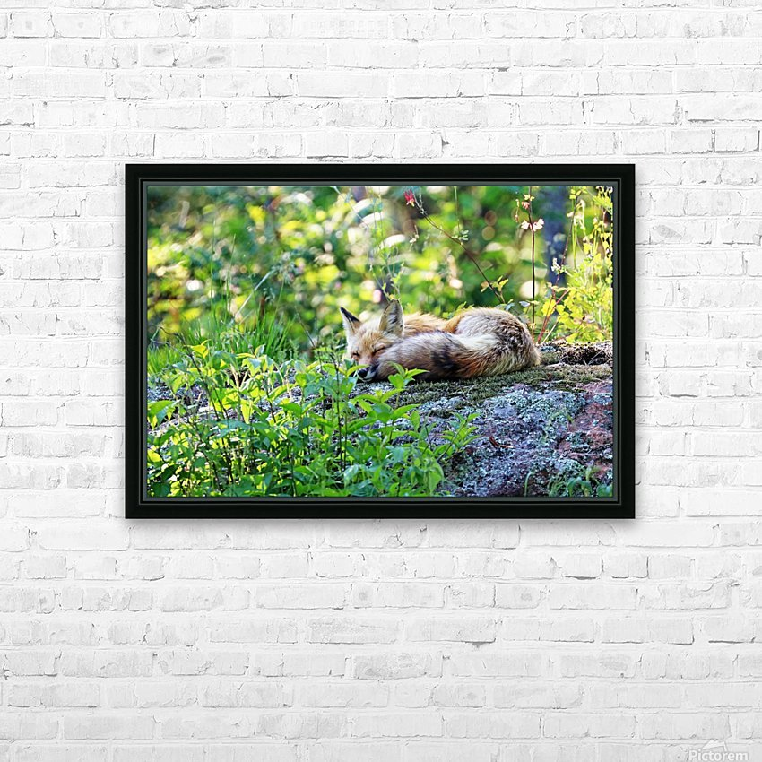 Nap Time For Red Fox I HD Sublimation Metal print with Decorating Float Frame (BOX)