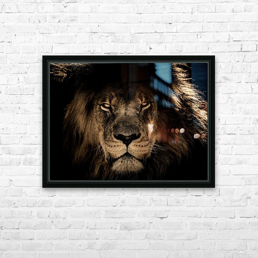 african lion wildcat mane closeup HD Sublimation Metal print with Decorating Float Frame (BOX)