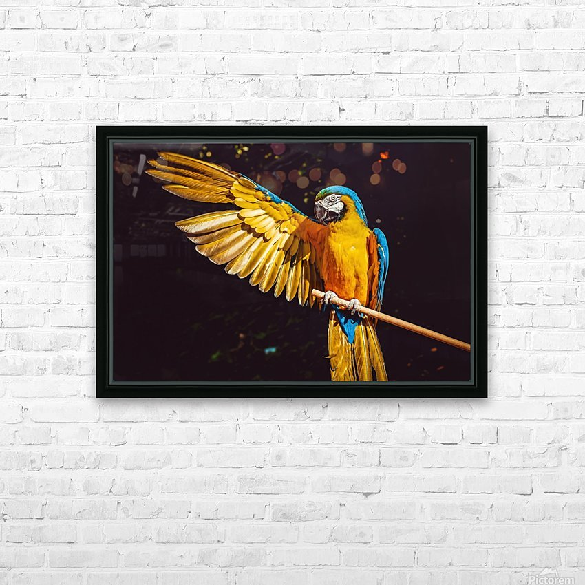 ara parrot yellow macaw bird HD Sublimation Metal print with Decorating Float Frame (BOX)