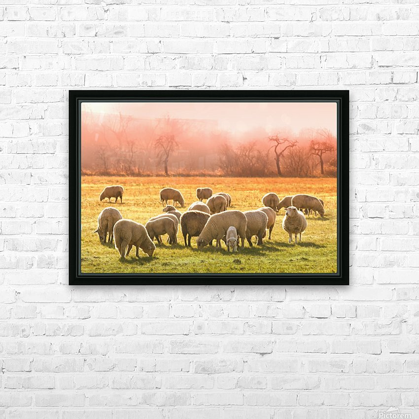 animal sheep flock of sheep meadow HD Sublimation Metal print with Decorating Float Frame (BOX)