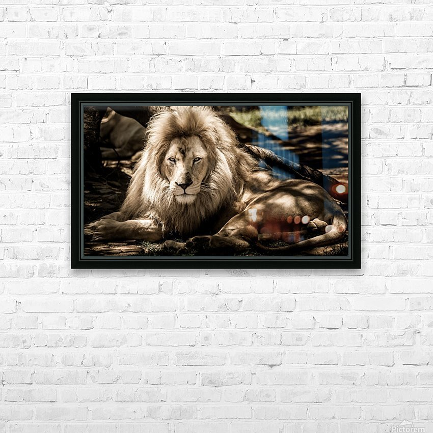 mammal lion animal portrait HD Sublimation Metal print with Decorating Float Frame (BOX)
