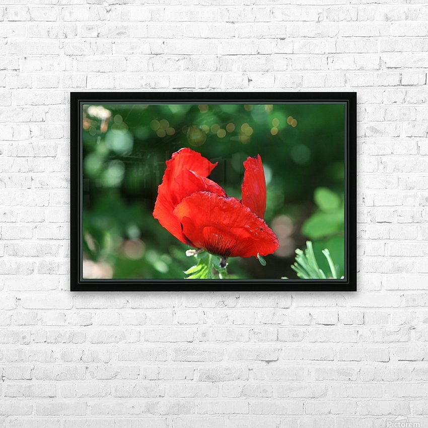 Red poppy HD Sublimation Metal print with Decorating Float Frame (BOX)