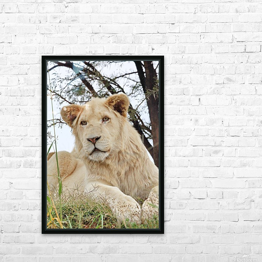 Young White Lion Male HD Sublimation Metal print with Decorating Float Frame (BOX)