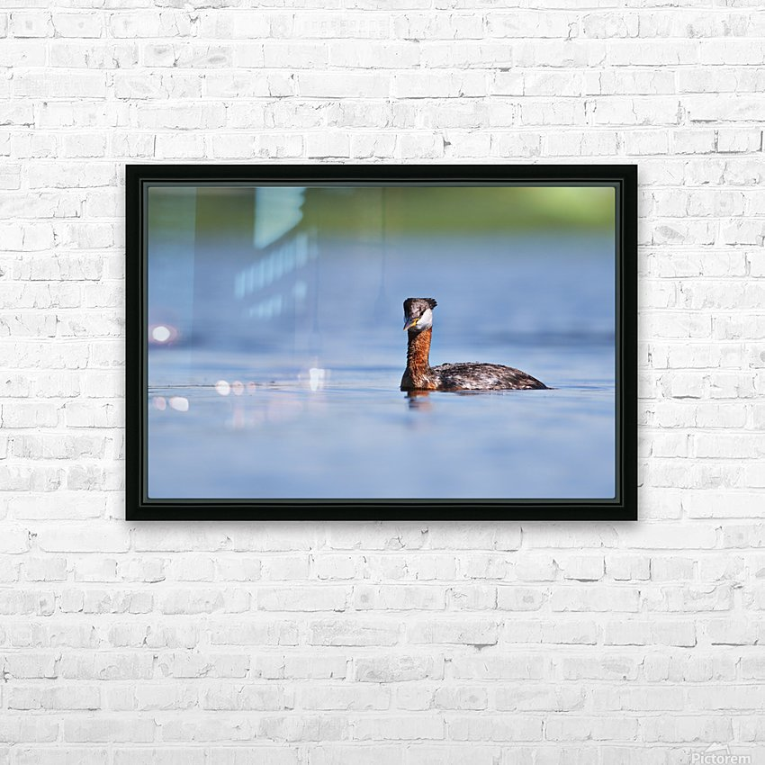 RED NECKED GREBE HD Sublimation Metal print with Decorating Float Frame (BOX)