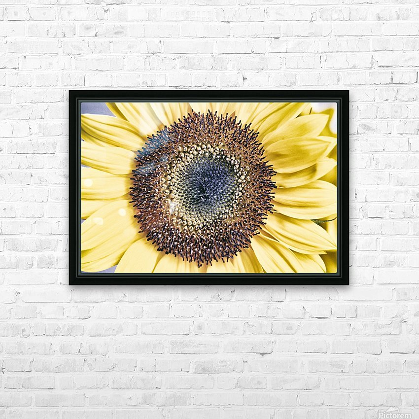 Sunflower Close Up HD Sublimation Metal print with Decorating Float Frame (BOX)