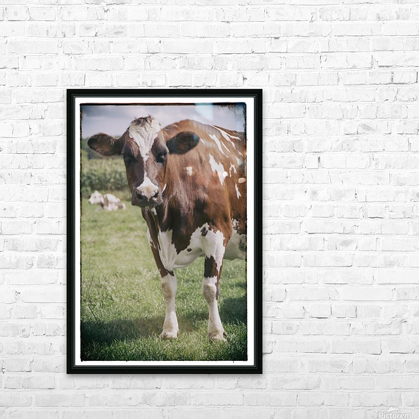 Brown Cow HD Sublimation Metal print with Decorating Float Frame (BOX)