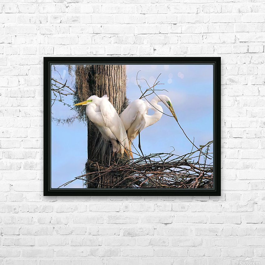 Mating Season - Great Egrets II HD Sublimation Metal print with Decorating Float Frame (BOX)