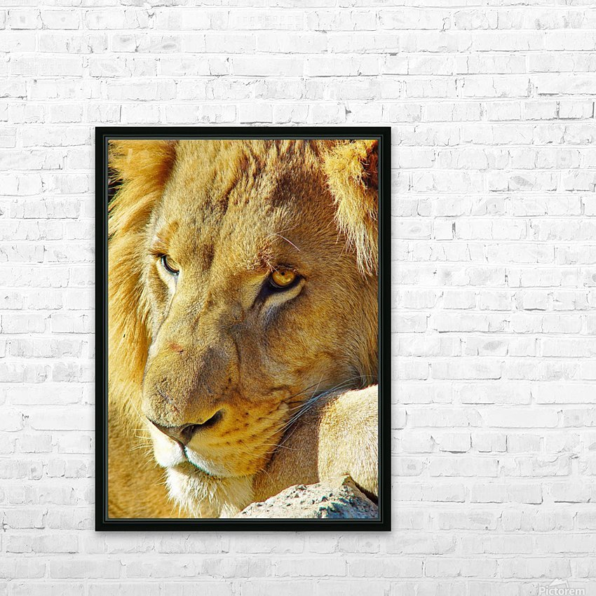Lion Male HD Sublimation Metal print with Decorating Float Frame (BOX)