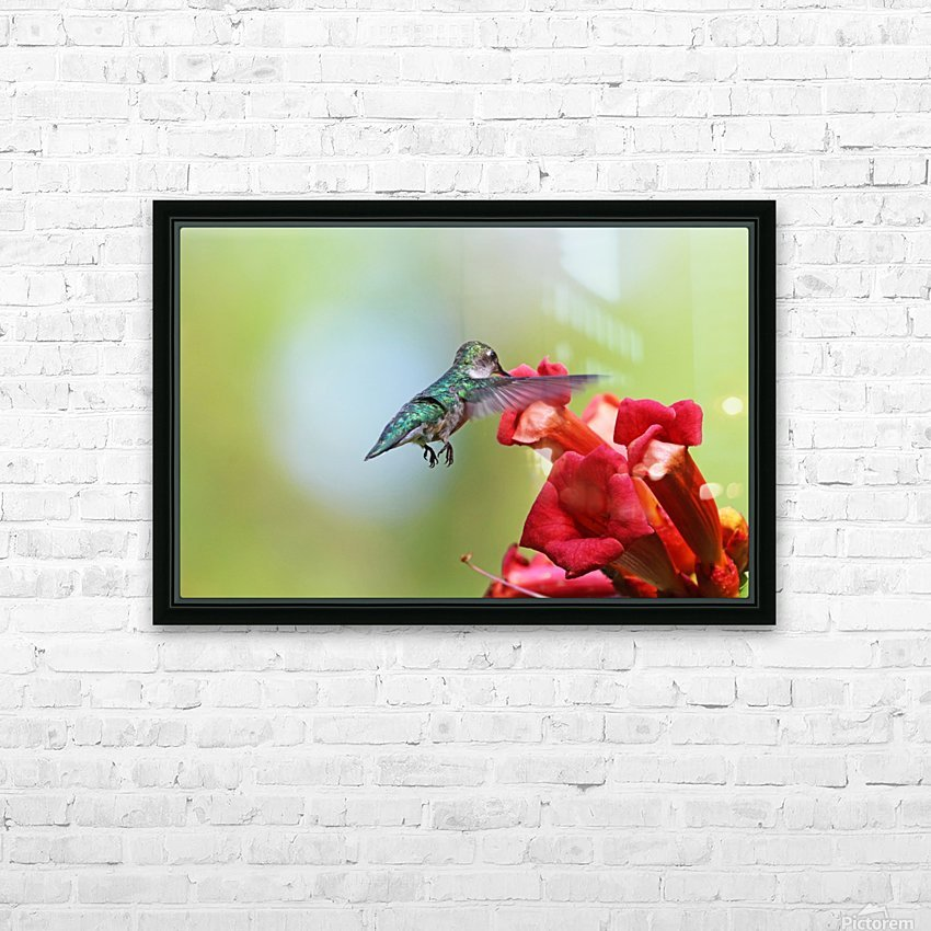Feeding On The Trumpets HD Sublimation Metal print with Decorating Float Frame (BOX)