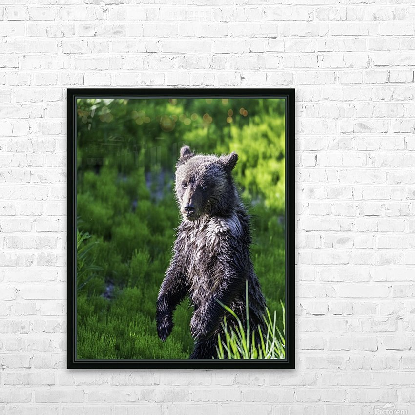 A grizzly cub named Pepper HD Sublimation Metal print with Decorating Float Frame (BOX)