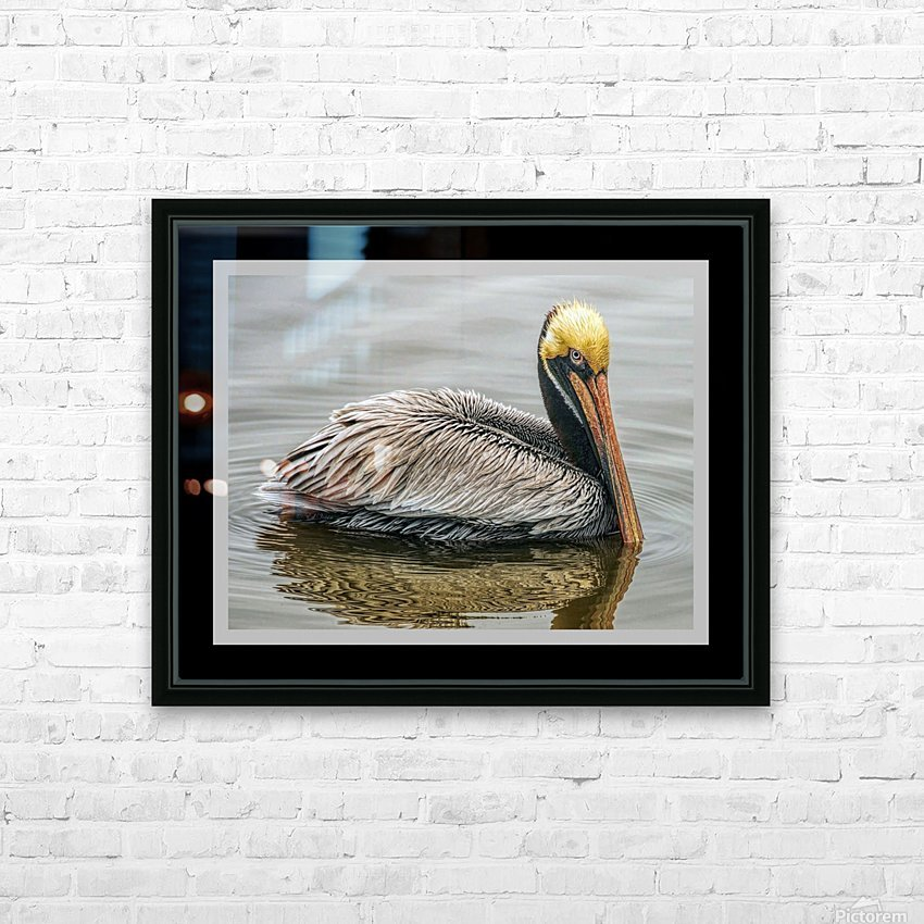 Brown Pelican II - HDR HD Sublimation Metal print with Decorating Float Frame (BOX)
