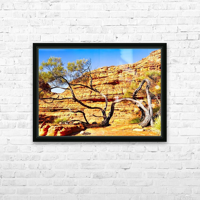 Twisted Tree - Kings Canyon HD Sublimation Metal print with Decorating Float Frame (BOX)
