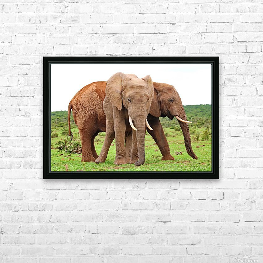 Addo Elephants 45 HD Sublimation Metal print with Decorating Float Frame (BOX)