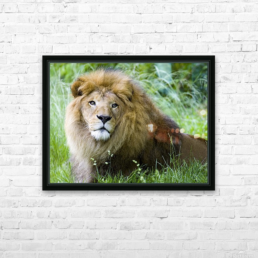 Simba HD Sublimation Metal print with Decorating Float Frame (BOX)