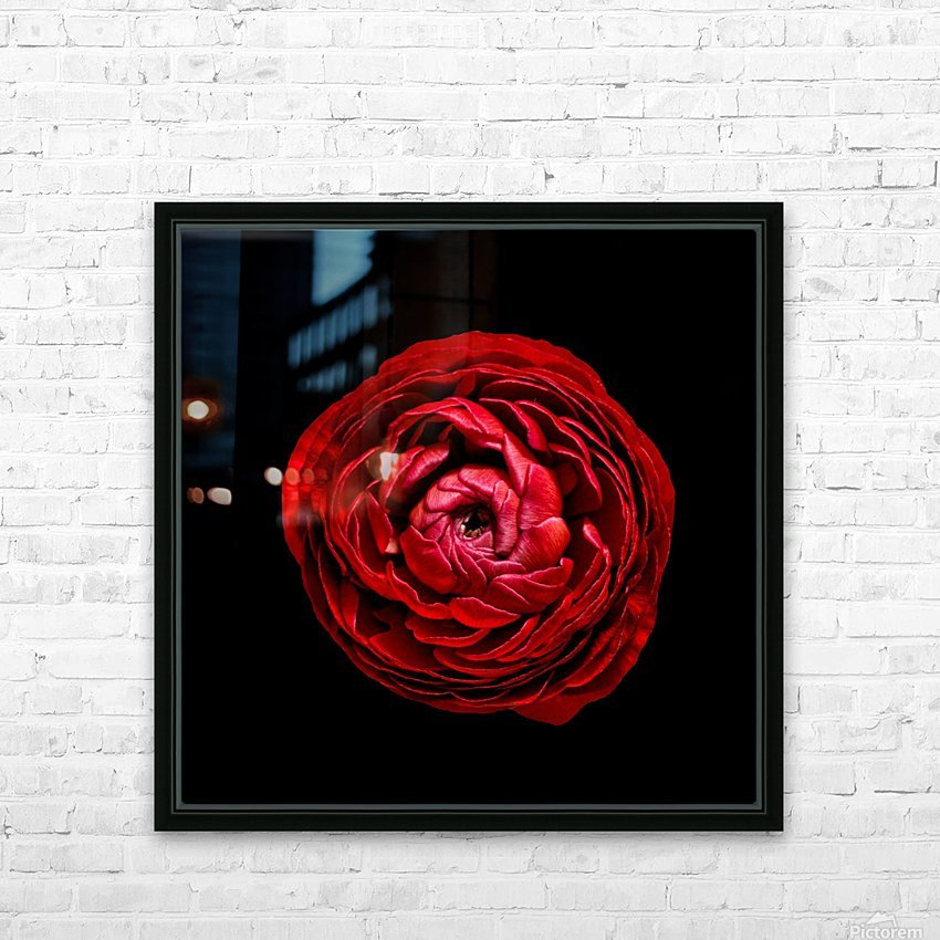 Anemone_3 HD Sublimation Metal print with Decorating Float Frame (BOX)