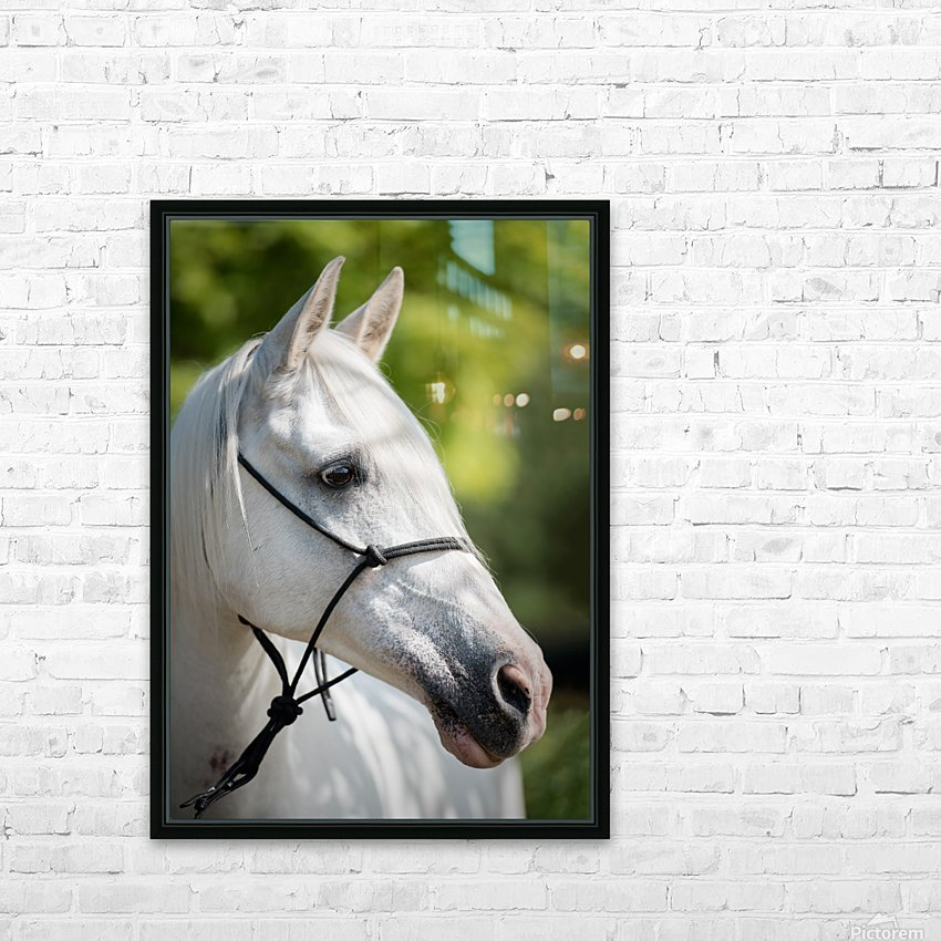 Horse Portrait HD Sublimation Metal print with Decorating Float Frame (BOX)