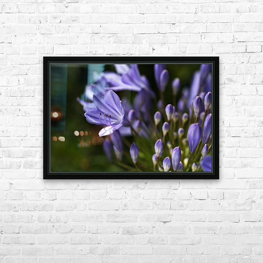 Agapanthus Blue HD Sublimation Metal print with Decorating Float Frame (BOX)