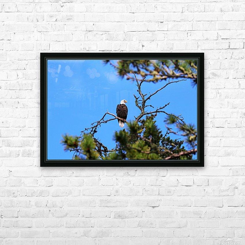 Bald Eagle Looking Regal HD sublimation métal imprimé avec décoration flotteur cadre (boîte)