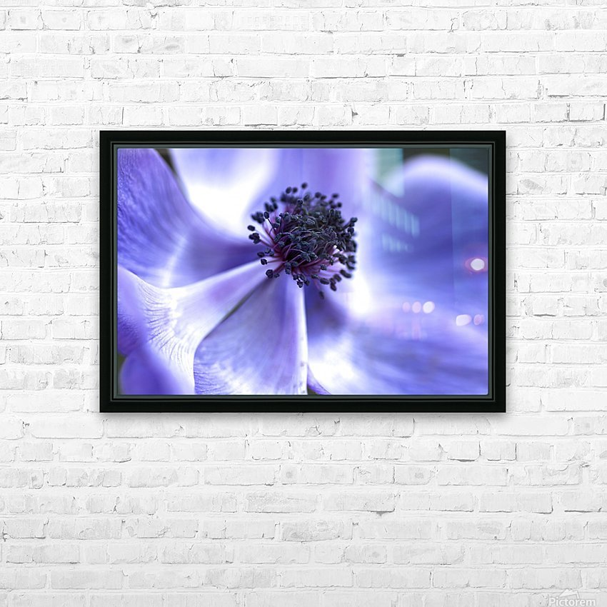 Blue Anemone HD Sublimation Metal print with Decorating Float Frame (BOX)