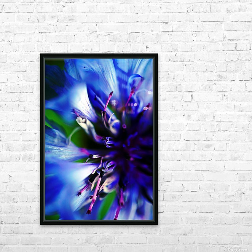 Abstract Pop Color Flower Photography 21 HD Sublimation Metal print with Decorating Float Frame (BOX)