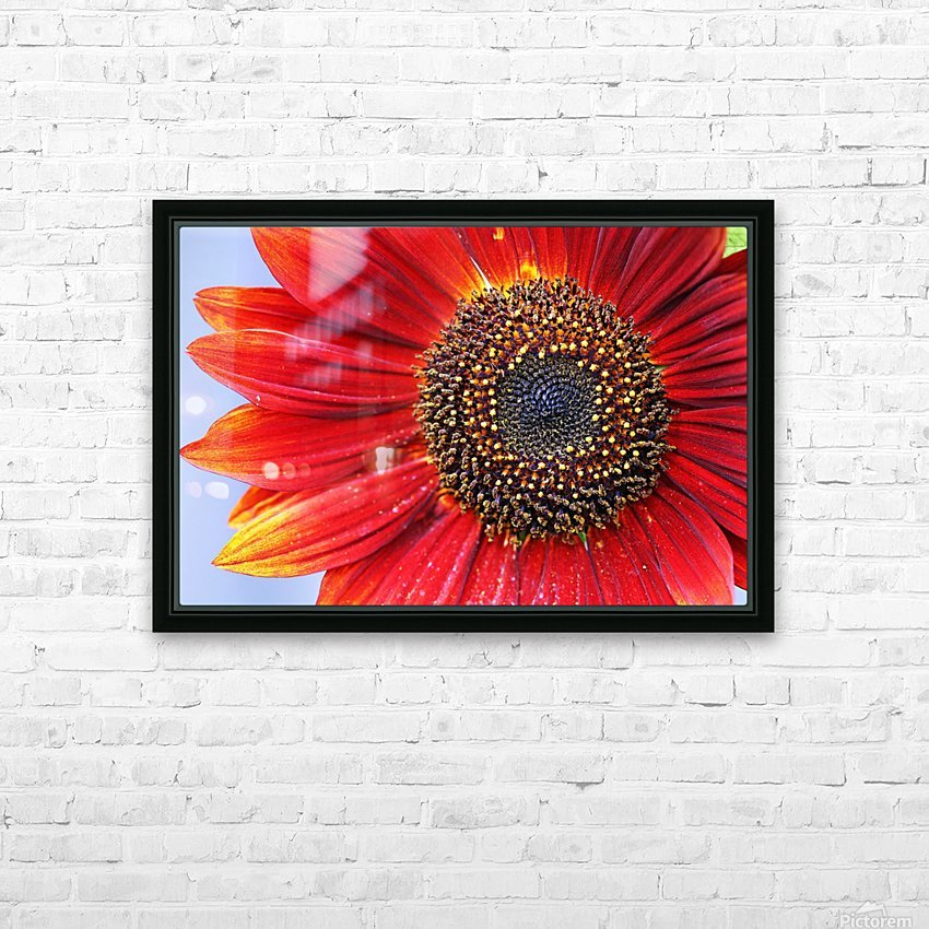 Ruby Red Sunflower HD Sublimation Metal print with Decorating Float Frame (BOX)
