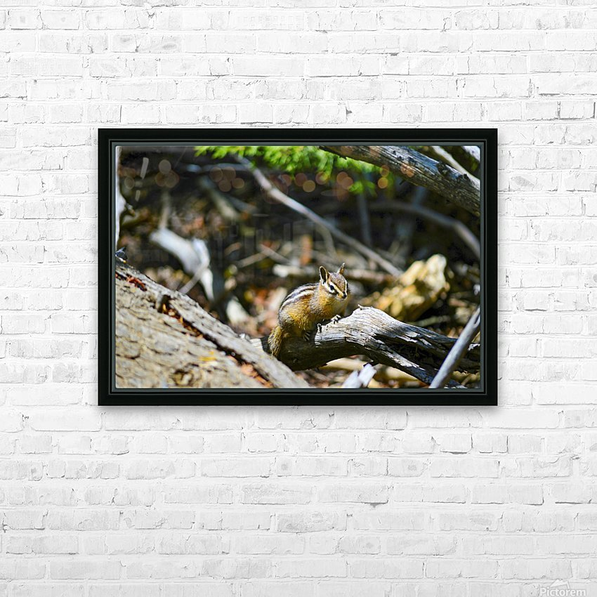Chipmunk HD Sublimation Metal print with Decorating Float Frame (BOX)