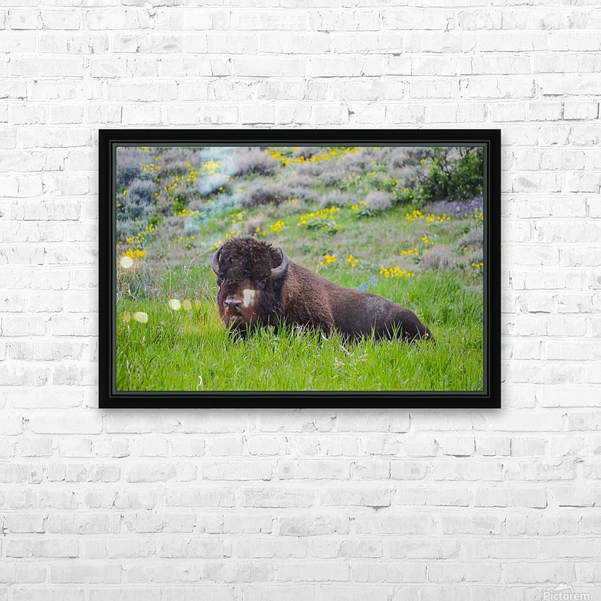 Bison in Wildflowers HD Sublimation Metal print with Decorating Float Frame (BOX)