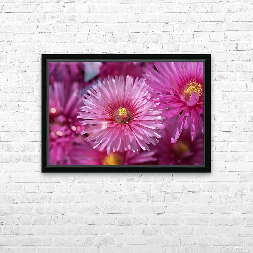 Pink Ice Plant Flowers HD Sublimation Metal print with Decorating Float Frame (BOX)