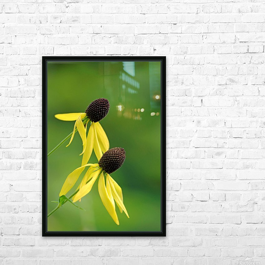 Great Coneflower HD Sublimation Metal print with Decorating Float Frame (BOX)