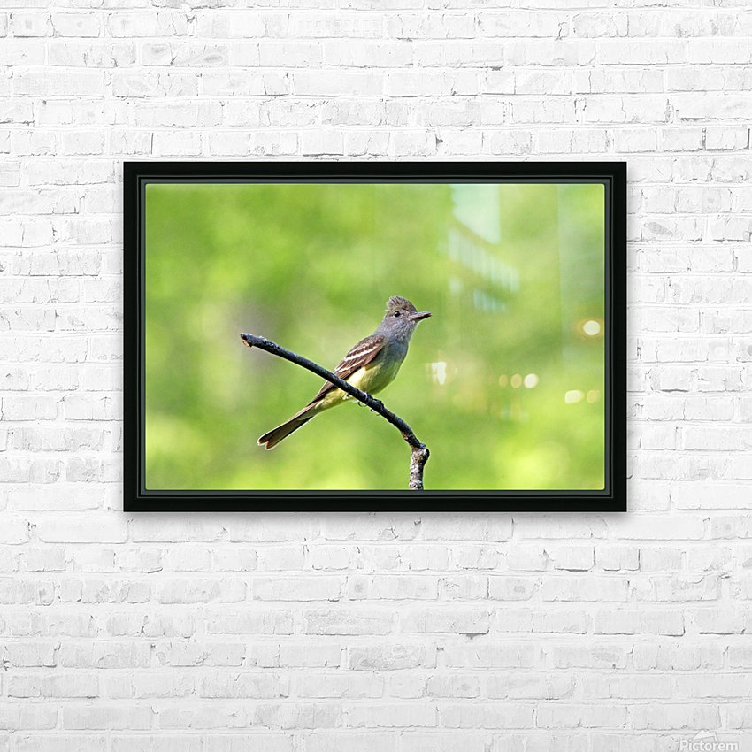 Great Crested Flycatcher With Snack HD Sublimation Metal print with Decorating Float Frame (BOX)