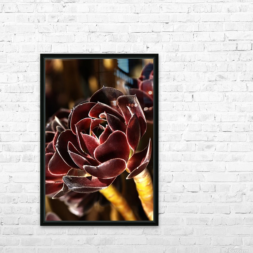 Purple Aeonium Succulent HD Sublimation Metal print with Decorating Float Frame (BOX)